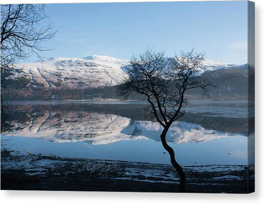 Derwentwater Tree View Canvas Print