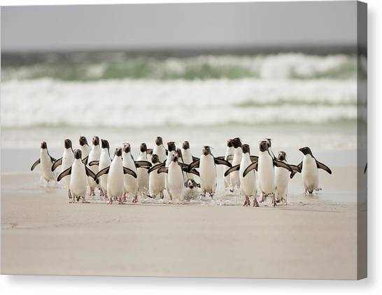 Penguins Canvas Print - Desembarco by Joan Gil Raga