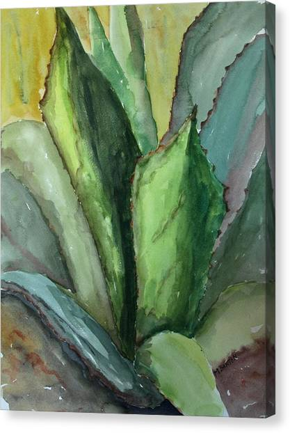 Desert Agave Canvas Print by Marilyn Barton