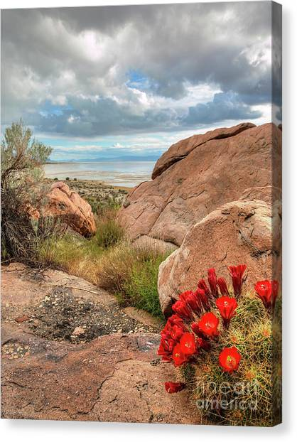 Canvas Print featuring the photograph Desert Bloom by Spencer Baugh