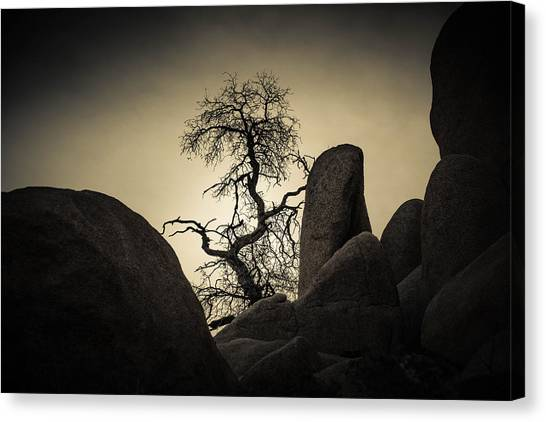 Desert Bonsai Canvas Print