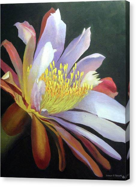 Desert Cactus Flower Canvas Print