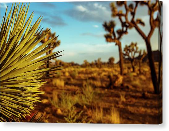 Desert Fan Canvas Print