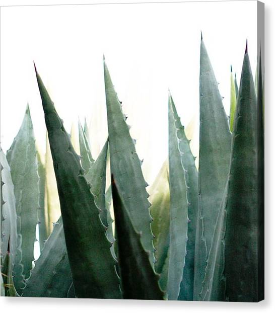 Vacations Canvas Print - Desert Flora With Sharp Succulent by Blenda Studio