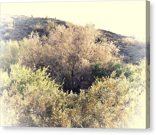 Desert Ironwood Afternoon Canvas Print