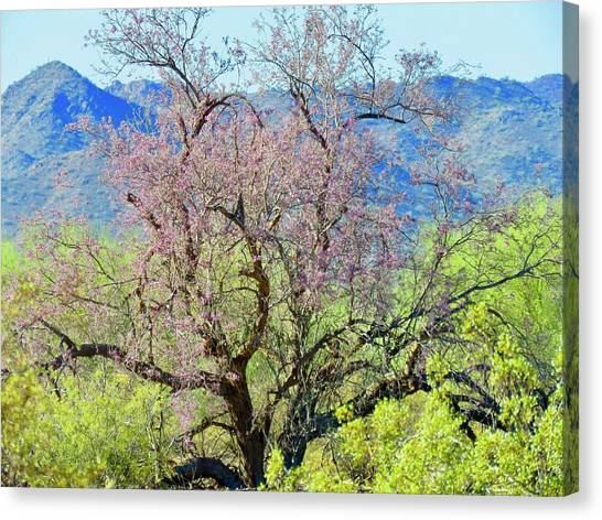 Desert Ironwood Beauty Canvas Print