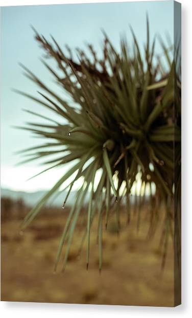 Desert Leaves Canvas Print