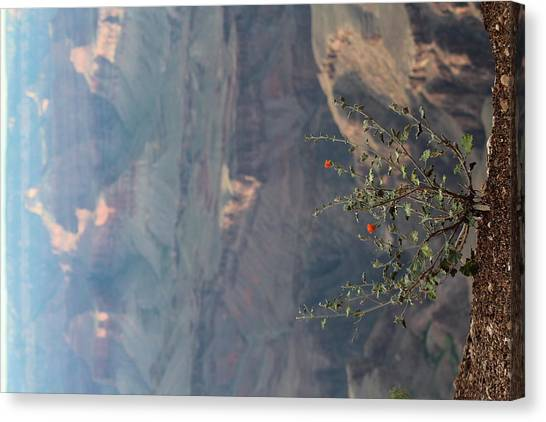 Grand Canyon Canvas Print - Desert Life by Amanda McCracken