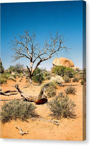 Desert Life Canvas Print by Michael  Cryer