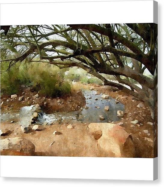 Desert Canvas Print - Desert Oasis Gilbert Riparian Preserve by Karyn Robinson