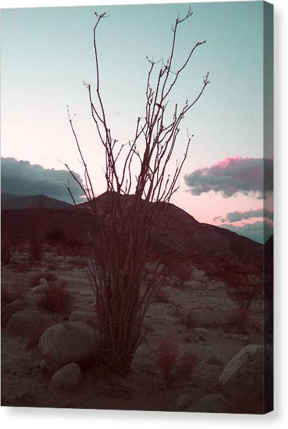 Death Valley Canvas Print - Desert Plant And Sunset by Naxart Studio