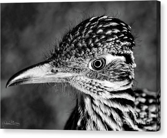 Desert Predator, Black And White Canvas Print