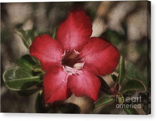 Desert Rose In Daytona Canvas Print