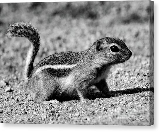 Scavenger, Black And White Canvas Print