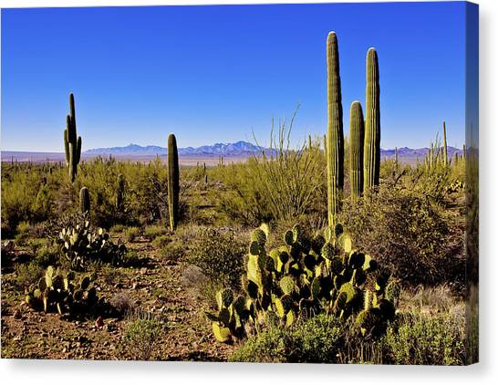 Sonoran Desert Canvas Print - Desert Spring by Chad Dutson