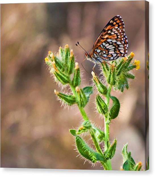 Desert Spring Life Canvas Print