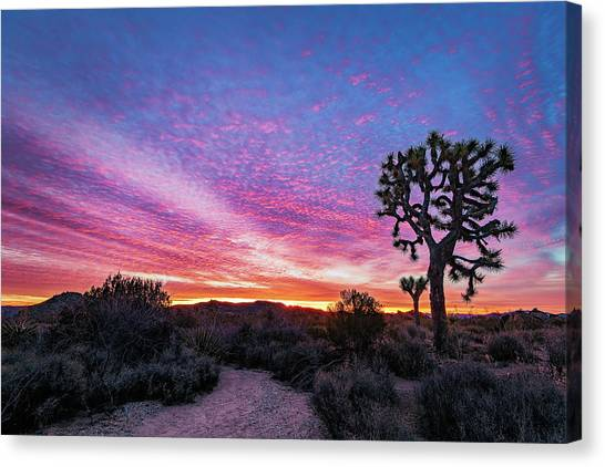 Desert Sunrise At Joshua Tree Canvas Print