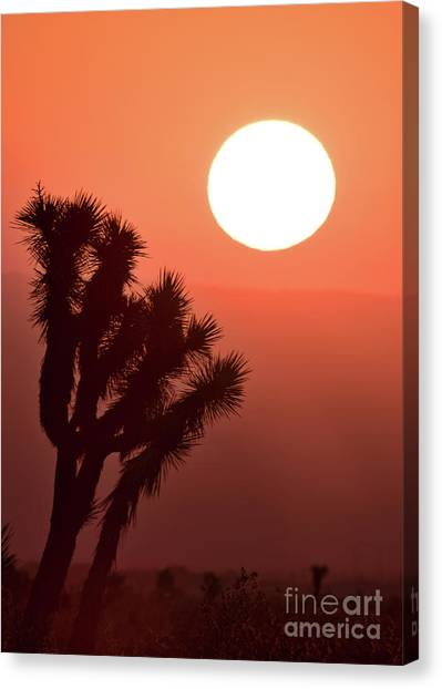 Desert Sunrise Canvas Print