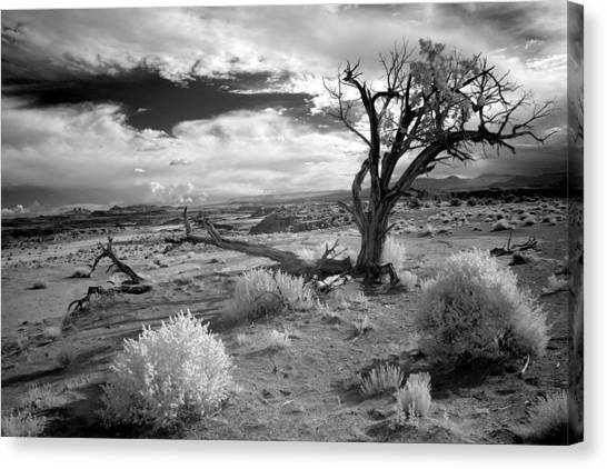 Desert Tree Canvas Print by G Wigler
