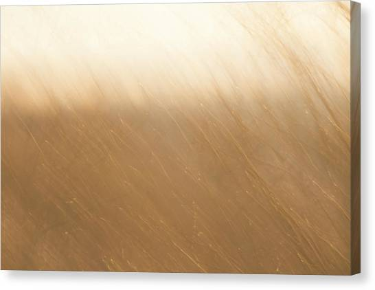 Desert Wind 2 Canvas Print