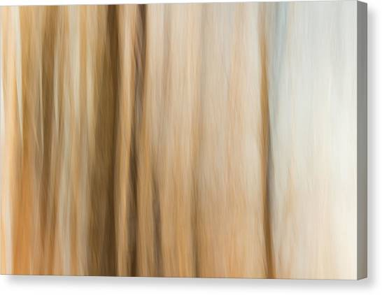 Desert Wind Canvas Print