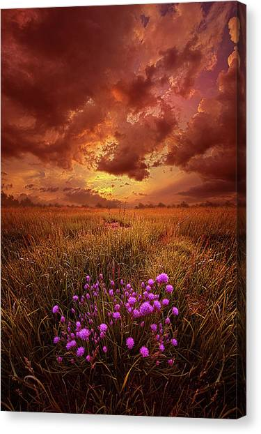 Clover Canvas Print - Desire by Phil Koch