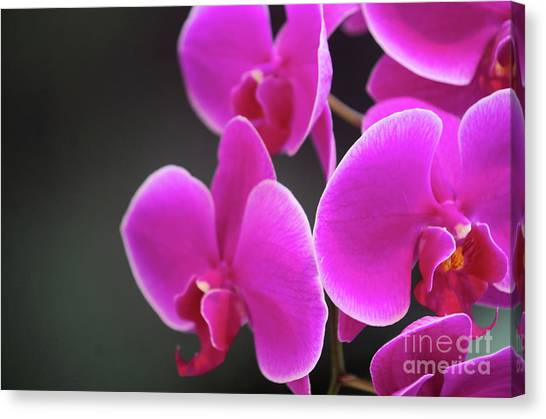 Details In Soft Colors  Canvas Print