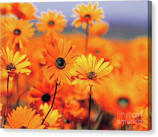 Details In Orange Canvas Print
