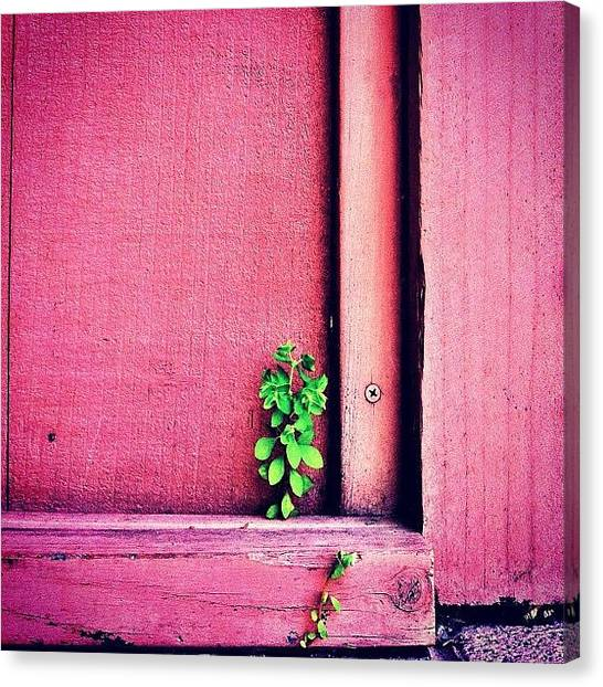 Color Canvas Print - Determination by Julie Gebhardt