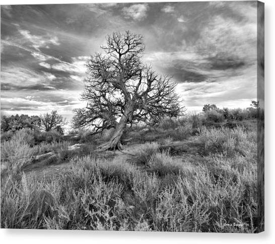 Devils Canyon Tree Canvas Print