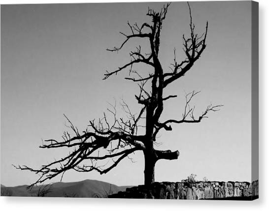 Devoid Of Life Tree Canvas Print