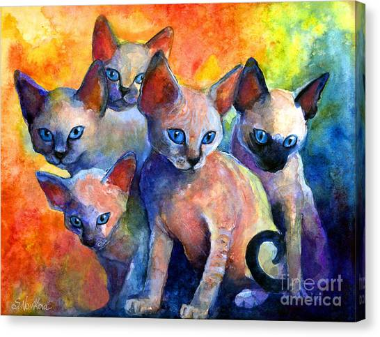 Siamese Canvas Print - Devon Rex Kitten Cats by Svetlana Novikova