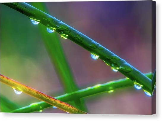 Contra Canvas Print - Dew Drops At Sunrise by Marc Crumpler