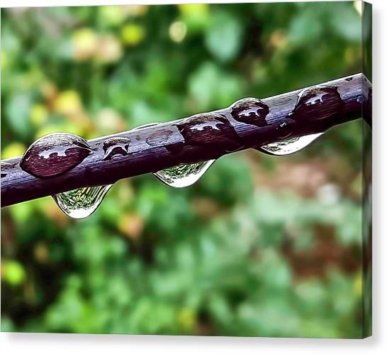 Canvas Print - Dew Drops by Elijah Knight