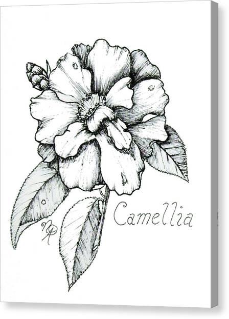 Dew Kissed Camellia Canvas Print