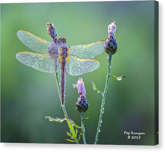 Canvas Print - Dew Laden Dragonfly by Peg Runyan