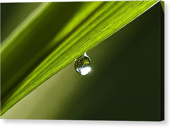 Dewdrop On A Blade Of Grass Canvas Print by Michael Whitaker