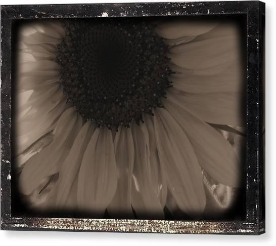 Diatrop Three Quarter Sunflower Canvas Print