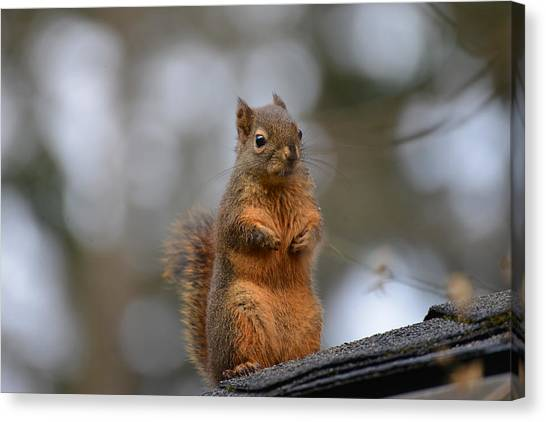 Did Anyone Say Birdseed? Canvas Print