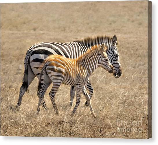 Different Stripes Canvas Print
