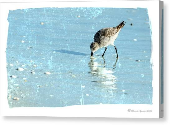 Sandpipers Canvas Print - Dig In by Marvin Spates