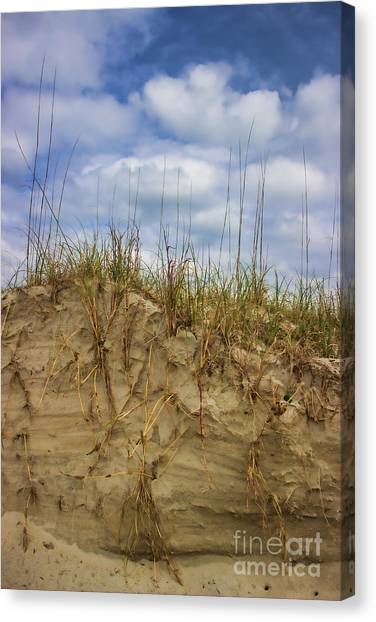 Digging In Deep In Sand Dunes Canvas Print