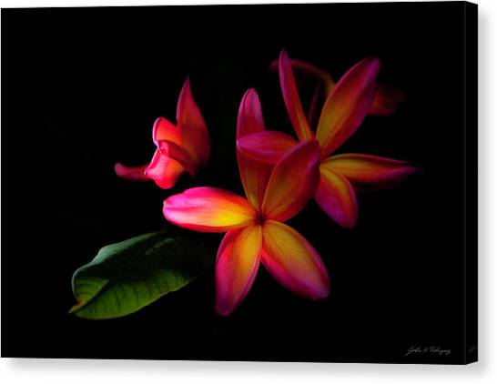 Digitized Sunset Plumerias  Canvas Print