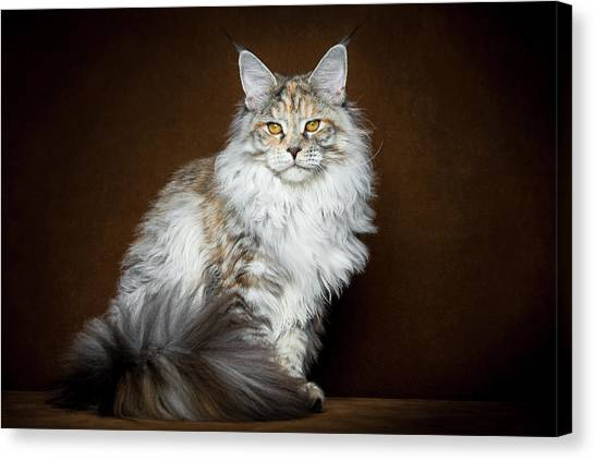 Dignified Lady Canvas Print