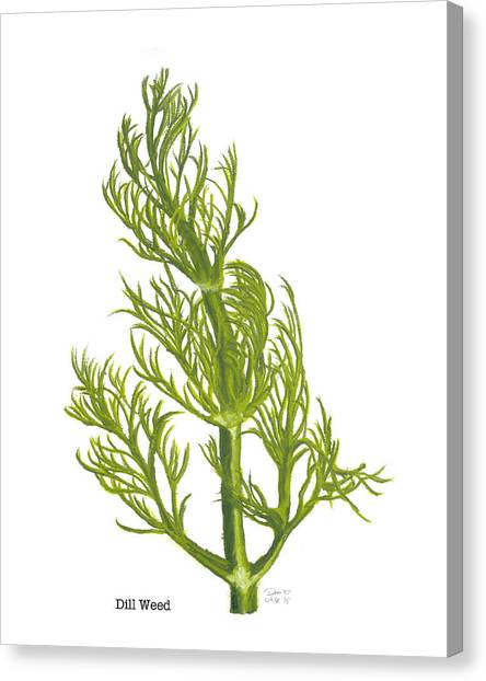Dill Plant Canvas Print