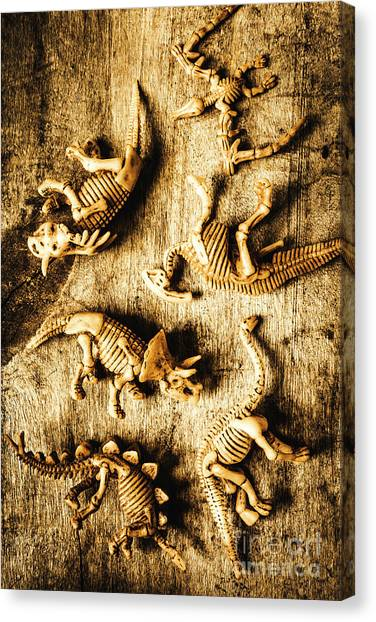 Historical Canvas Print - Dinosaurs In A Bone Display by Jorgo Photography - Wall Art Gallery