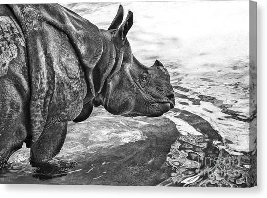 One Horned Rhino Canvas Print - Dip In The Pool by Jamie Pham