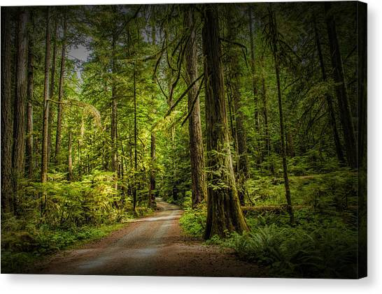 Randy Moss Canvas Print - Dirt Road On Vancouver Island by Randall Nyhof