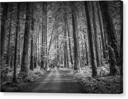 Randy Moss Canvas Print - Dirt Road Through A Rain Forest In Black And White by Randall Nyhof