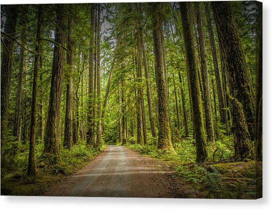 Randy Moss Canvas Print - Dirt Road Through A Rain Forest On Vancouver Island by Randall Nyhof